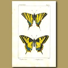 This is an antique stipple engraving of butterflieswas made in 1819.
