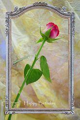 Rose i ramme - Rose in Frame