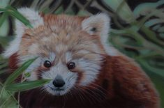 Panda pastels by *Sarahharas07 on deviantART