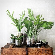 Clear Vessels + See-Through Botanicals | Poppytalk