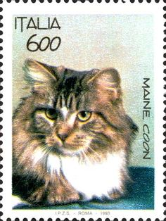 Italian Postage Stamp featuring a  Maine Coon cat