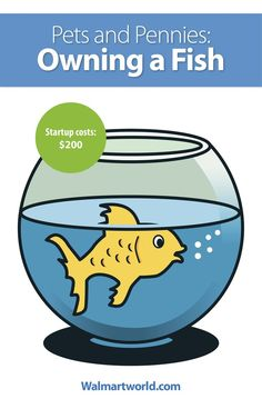 Dont Be In A Fishbowl When It Comes To Health Needs For Your Pet Fish Heres What Youll Need For A Good Environment For Your Little Guy To Grow Up In