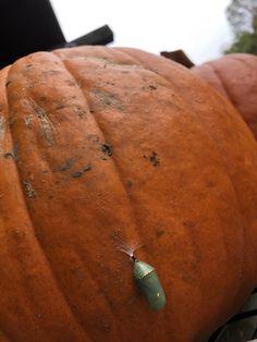 Pumpkin House, Vegetables, Food, Essen, Vegetable Recipes, Meals, Yemek, Veggies, Eten