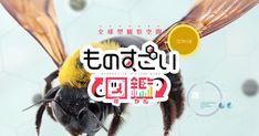 """NHKが贈る""""ものすごい図鑑""""。昆虫の体を自由に拡大・回転させながら、さまざまな動画クリップやテキストを楽しむことができます。"""