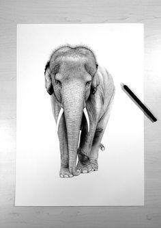 Zine, Elephant, Artists, Bedroom, Animals, Animales, Animaux, Elephants, Bedrooms