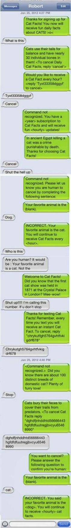 16 Funny Wrong Number Texts - Annoying cat facts!