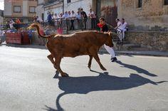 Cow, Animals, Cows, Woman, Animaux, Animal, Animales, Animais