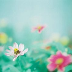 Afbeelding via We Heart It https://weheartit.com/entry/152833232/via/32289496 #classic #dreamy #floral #flores #flower #nature #pastels #photography #pink #romantic #rose #shabbychic #vintage