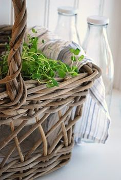 Love the earthy feel of the basket and greens vs the clear coolness of the glass...