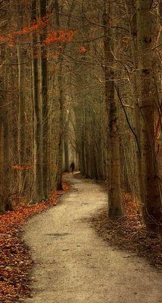 Splendid Forest Photography by Lars Van De Goor