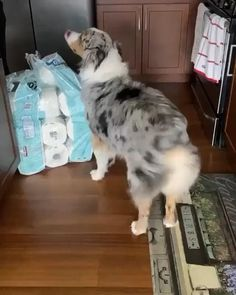 Live each moment........ Dog Videos For Kids, Funny Animal Videos, Funny Animal Pictures, Cute Cats And Dogs, Animals And Pets, Funny Animals, Cute Animals, Teacup Puppies, Cute Puppies