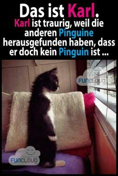 Karl ist traurig, weil die anderen Pinguine es herausgefunden habe… That's Karl. Karl is sad because the other penguins found out … – Fun – Karl und Co. Funny Shit, Funny Cute, The Funny, Hilarious, Funny Animal Pictures, Cute Pictures, Funny Animals, Cute Animals, Crazy Cat Lady