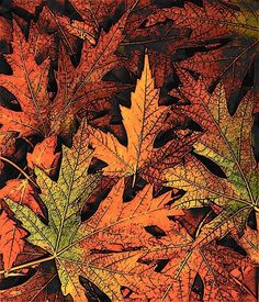 photos of fall | go leaf color hunting, take photos in front of them together, collect ...