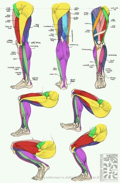 Anatomy - Leg Muscles - How to draw legs - human anatomy - Drawing Reference Leg Anatomy, Anatomy Poses, Anatomy Study, Anatomy Art, Leg Muscles Anatomy, Arm Muscles, Human Muscle Anatomy, Anatomy Practice, Quad Anatomy