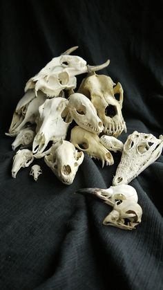 #GothicPhotography #horror #Bones