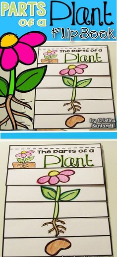 1. Lesson Plan Ideas- Parts of a plant flip book.