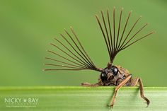 Os registros do fotógrafo Nicky Bay evidenciam a extensa variedade de pequenos animais da fauna de seu país, Cingapura.