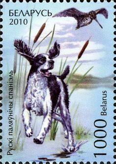 Stamp%3A%20Russian%20Spaniel%20(Canis%20lupus%20familiaris)%20(Belarus)%20(Dogs)%20Mi%3ABY%20837%2CSn%3ABY%20750%2CYt%3ABY%20719%2CSg%3ABY%20837%2CWAD%3ABY044.10%2CBLR%3ABY%20854%20%23colnect%20%23collection%20%23stamps