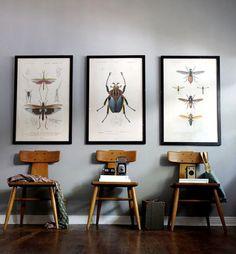 Reino Animalia, Filo Arthropoda, Subfilo Hexapoda, Classe Insecta