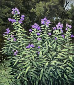 New England Aster, original oil on canvas by Lewis Bryden | R. Michelson Galleries