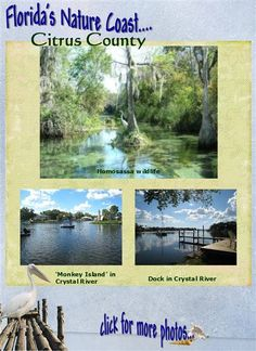 Photos of Citrus County including Inverness, Citrus Springs, Crystal River, Citrus Hills, Homosassa