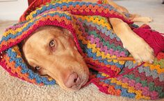 Someday I will be able to make this...the blanket, not the dog. That would just be weird.