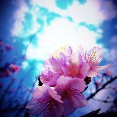 【tamagon_tama】さんのInstagramをピンしています。 《桜ネタばかり まだまだ続く予定ですが イイよね。  今日も小さな 楽しいや嬉しいを 見つけてながら ひとつひとつだぞい♪  朝だから! おはようございます♪ (^^♪ #桜 #さくら #桜色 #空 #空色 #そら #おはよう》