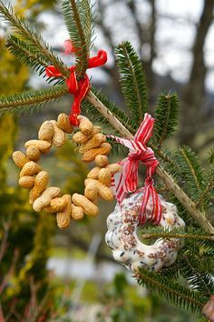 Miniguglhupf und Erdnussring