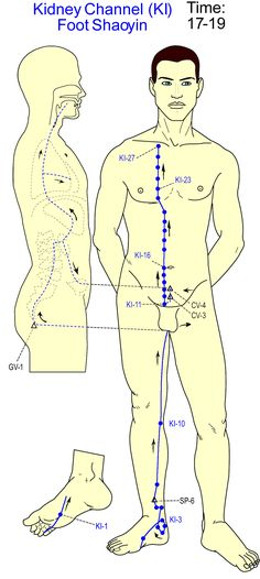 Kidney Channel Repinned by www.academ.nl/ & www.medischeqigong.com #qigong #acupuncture #health