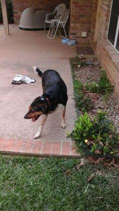Tucker aka my dog