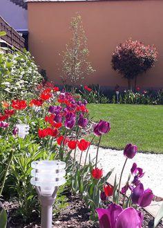 easter tulip flower bed Easter Flowers, Tulips Flowers, Purple Tulips, Flower Beds, Plants, Red, Plant, Garden Beds, Flowers Garden