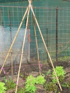 How to Make a Bamboo Tepee in a Minute - Easy instructions on how to make a collapsible tripod to grow your climbing veggies from sustainable bamboo.   The Micro Gardener