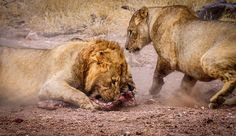Interesting Facts and Activities — Warthog Lodge, holiday home rental Animal Species, Game Reserve, Nature Reserve, Breakfast Time, Wildlife Photography, Lions, South Africa, Fun Facts, African
