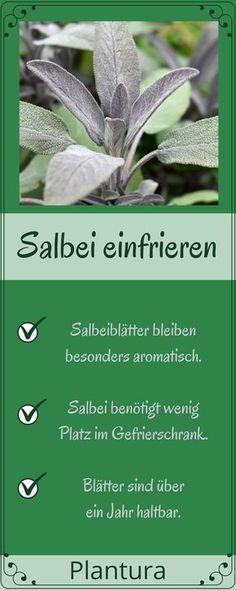 Salbei konservieren und haltbar machen - es gibt verschiedene Formen des Konservierens, z.B. kann man Salbei trocknen, einfrieren oder die Blätter zu Salbeibutter verarbeiten. Wir zeigen Euch, welche Vor- und Nachteile diese Methoden haben! #Salbei #konservieren