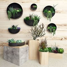 diy hanging planter bags - Home Dekoration Plant Wall Decor, House Plants Decor, Hanging Succulents, Hanging Planters, Outdoor Wall Planters, Hanging Terrarium, Hanging Flower Pots, Indoor Garden, Indoor Plants