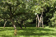 Boomgaard Theehuis Sprakel in het Bos. Later als ik groot ben... wil ik ook graag zo'n boomgaard.