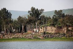 חוף ירדן- כינרת