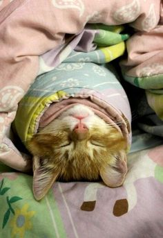 purritos - Google Search