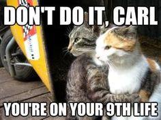 Don't do it Carl!