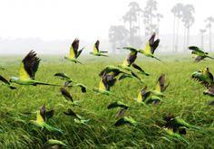 Concurso NatGeo - Ambientalistas em rede (1)