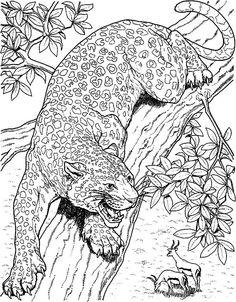 Jaguar Coloring page en 2019 | Dibujos para colorear ...