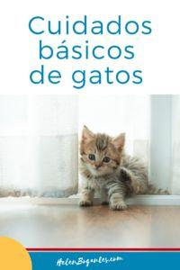 Cuidados básicos de #gatos para dueños y cat-sitters Cats, Ideas Para, Blog, Animals, Stuff Stuff, Puppy Food, Cat Sleeping, Scratching Post, Gatos