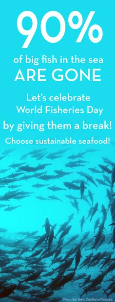 Happy World Fisheries Day - seems like there is a holiday for everything right? Well this one is good for the ocean - and easy to celebrate! Choose sustainable seafood tonight and help give the big fish a break. You can easily choose sustainable fish - whether at the grocery store or a restaurant by downloading the Seafood Watch app! http://www.seafoodwatch.org