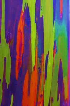Colorful Bark of Rainbow Eucalyptus: Eucalyptus deglupta [Family: Myrtaceae] - Rainbow Eucalyptus @ Australia Patterns In Nature, Textures Patterns, Foreground Middleground Background, Rainbow Eucalyptus Tree, Rainbow Wallpaper, Colorful Wallpaper, Miracle Tree, Photo Tree, Tree Bark