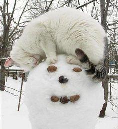 Beste sneeuw maatjes