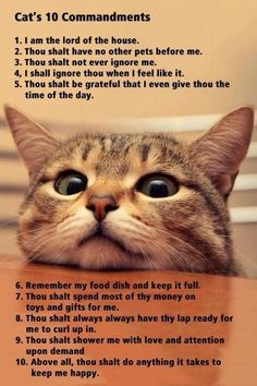 A cat's 10 commandments.
