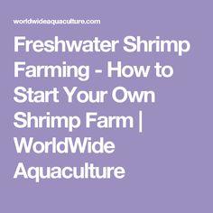 Freshwater Shrimp Farming - How to Start Your Own Shrimp Farm | WorldWide Aquaculture
