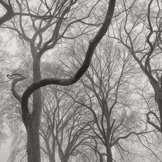 Branches by Antonio M. Rosario