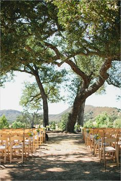 outdoor wedding ceremony If I remarry someday.  I would like to get married under a big old tree.