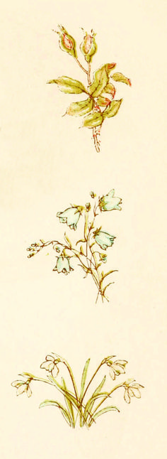 Vintage floral illustration from 'Language of Flowers' – Illustrated by Kate Greenaway http://www.amazon.com/gp/product/1445508702/ref=as_li_tl?ie=UTF8&camp=1789&creative=9325&creativeASIN=1445508702&linkCode=as2&tag=reaboo09-20&linkId=N2A7WM2E2LSKLQMF
